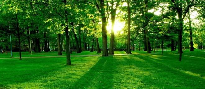 cropped-summer_green_nature_1600x1200.jpg